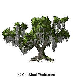 isolated., 오크, 벡터, 나무, 삽화