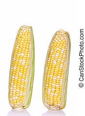 Isolated 2 ears of sweet corn