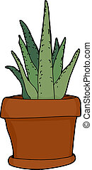 Isolated Aloe Plant - Green aloe plant in pot over isolated ...
