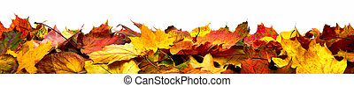 Isolated autumn leaves banner