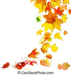 Isolated autumn maple leaves falling to ground