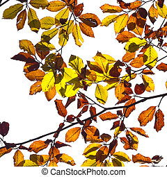 isolated autumn leaves on a branch with the background