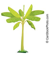 isolated banana plant on white background vector design