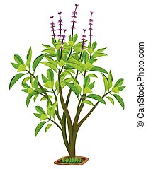 isolated basil plant on white background vector design