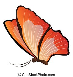 Isolated beautiful butterfly