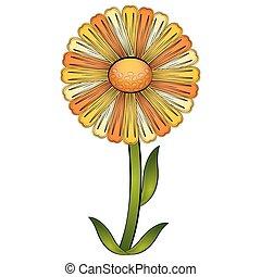 Isolated beautiful daisy flower