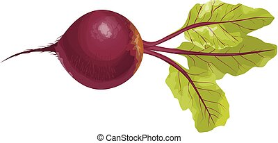 Isolated beet root.