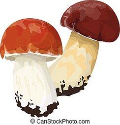 Isolated birch bolete on white background. Fresh and tasty mushroom.