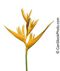 isolated bird of paradise flower
