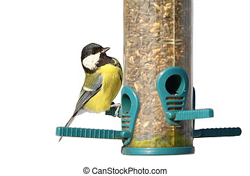 isolated bird on feeder