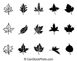 Black Maple leaves silhouette