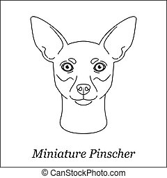 Isolated black outline head of Miniature Pinscher on white background. Line cartoon breed dog portrait.