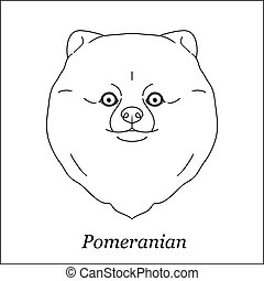 Isolated black outline head of pomeranian, german spitz on white background. Line cartoon breed dog portrait.