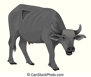 isolated buffalo on white background vector design
