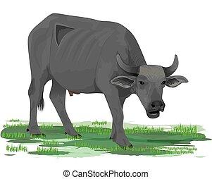 isolated buffalo on white background vector design
