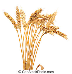 Isolated bunch of wheat - Isolated bunch of golden wheat ear...
