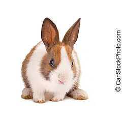 Isolated little easter bunny on a white background