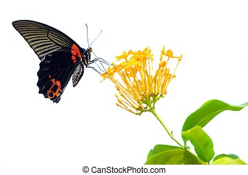 Isolated butterfly and flower