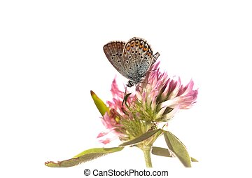 Isolated butterfly on a flower