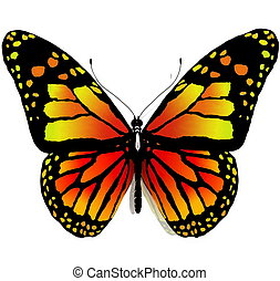Isolated butterfly on a white bac