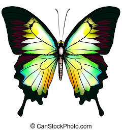 Isolated Butterfly Vector