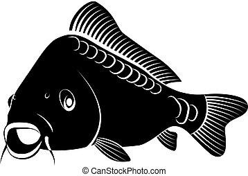 isolated carp fish - clip art illustration