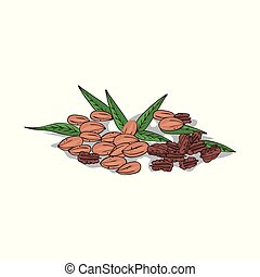 Isolated clipart Pecan - Isolated clipart of plant Pecan on...
