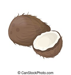 Isolated coconut nut.