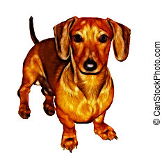 Isolated Crayon Drawing Painting of Miniature Dachshund -...