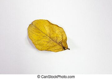 Isolated Crepe Myrtle lef in fall colors of yellows and reds