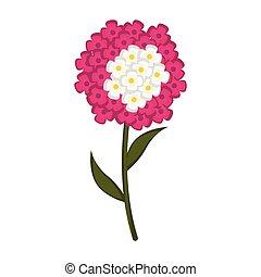 Isolated cute verbena flower icon. Vector illustration design