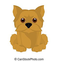 Isolated cute yorkshire terrier