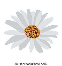 Isolated daisy flower
