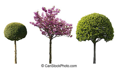 isolated decorative trees - three ornamental trees isolated...