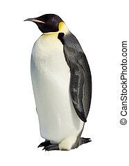 Isolated Emperor Penguin - Emperor penguin isolated against...