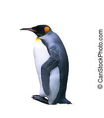 Isolated emperor penguin