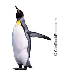 Isolated emperor penguin isolated over white