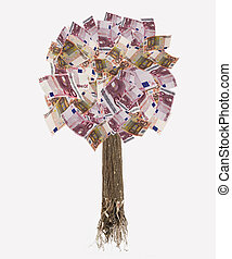 isolated euro banknote tree with roots