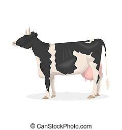 Isolated farm cow.