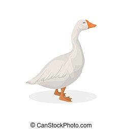Isolated farm goose.
