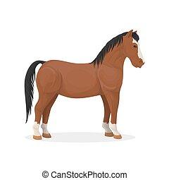 Isolated farm horse.