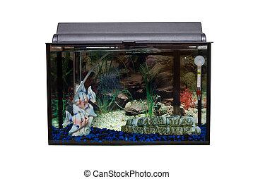 Isolated Fishtank - A glass rectangular fishtank isolated...
