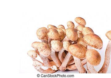 isolated fungus