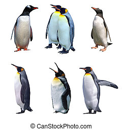 Gentoo and emperor penguin isolated on white and some with clipping paths