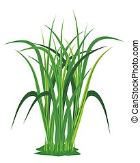 isolated grass plant on white background vector design