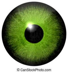 Isolated green eye illustration