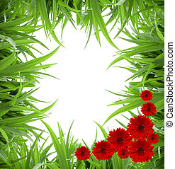Isolated green grass and flowers