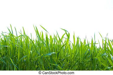 green grass on white