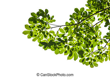 Isolated green leaf on white background with clipping path