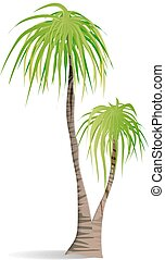 Isolated green palm.